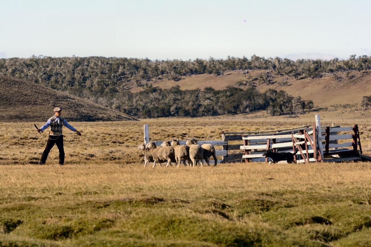 Tierra del Fuego: 45° Fiesta del Ovejero